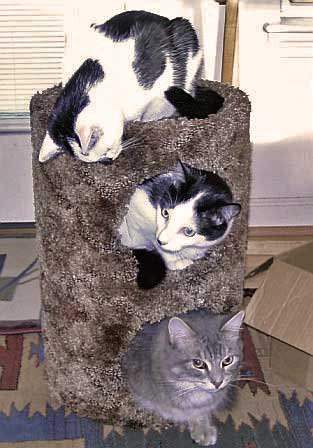 3 Healthy Wild Kitty Cat Food Kitties in a cat condo